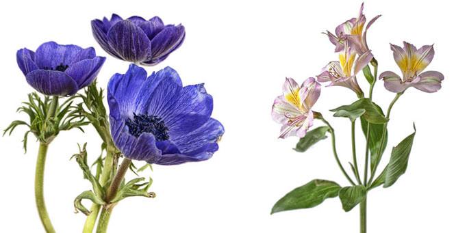 Indoor Flower Photography