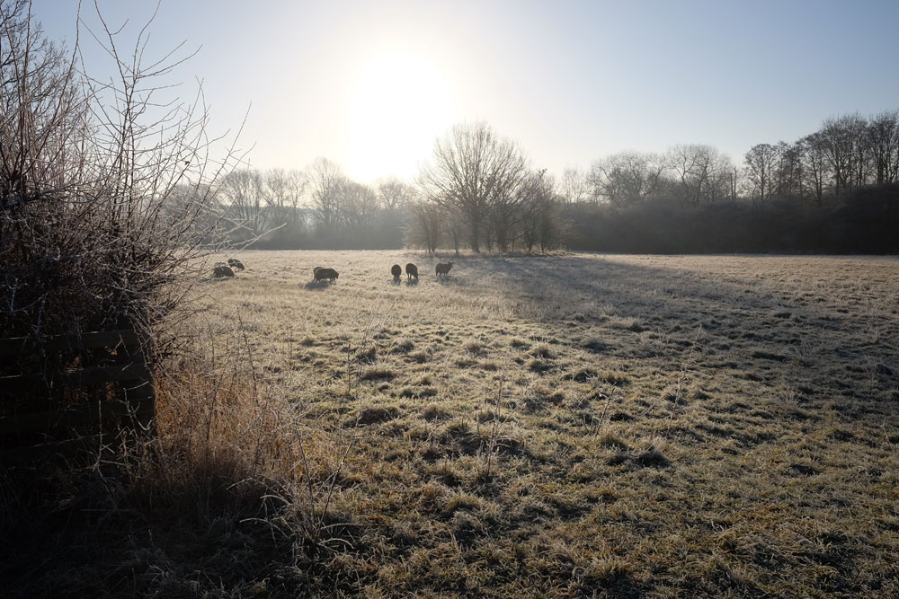 Frost on grass in the landscape