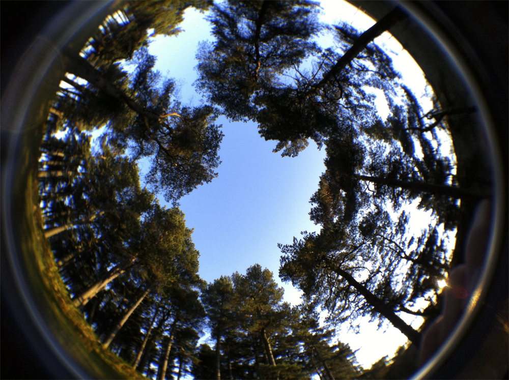 Fisheye Trees