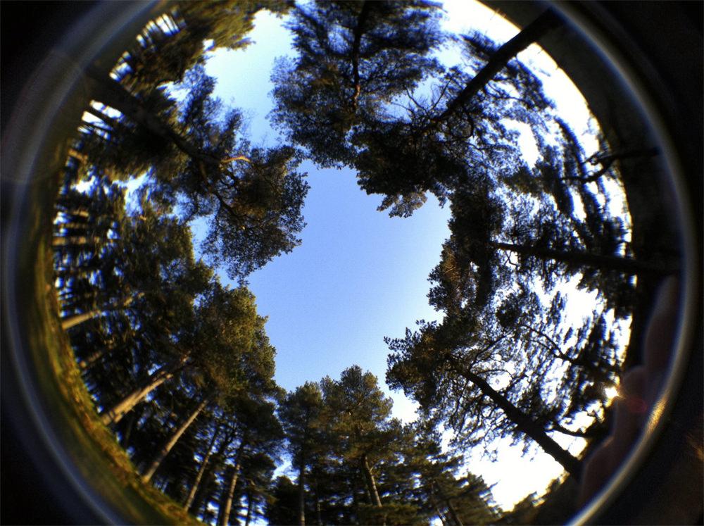Fisheye Trees