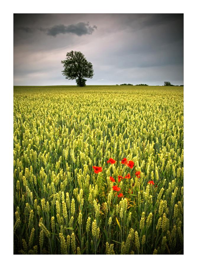 Wheat Fields by petejeff