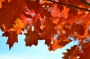 Thumbnail : 10 Top Tips For Taking Better Autumn Photos With A Compact Camera