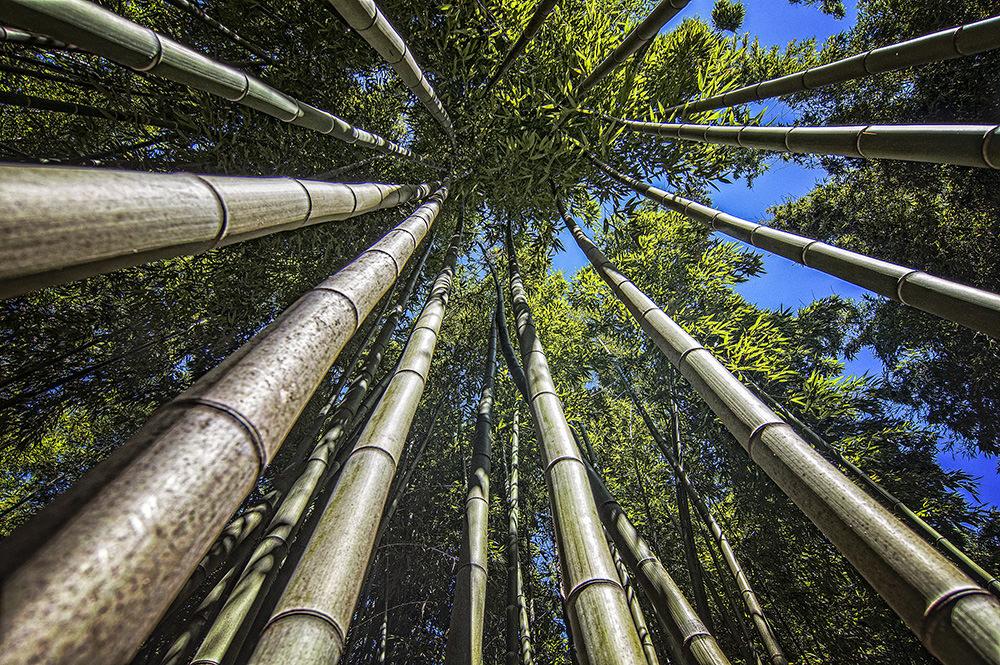 Bambousal