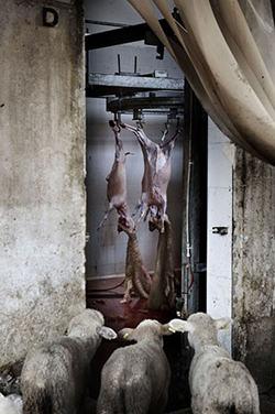 Tommaso Ausili's winning image