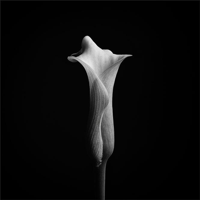 Sensuality - Nick_w