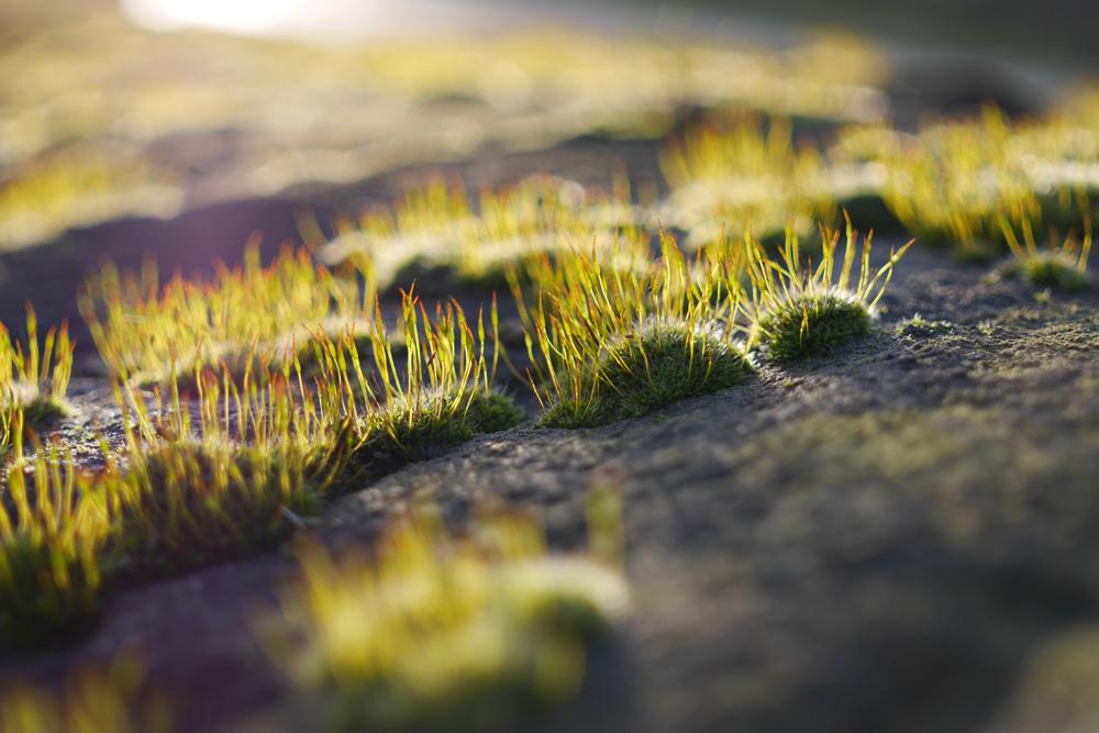 Macro moss shot