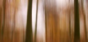 3 Ways To Capture Autumn Photos With A Twist - Three Abstract Ideas