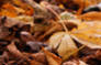 Autumn Photography Tips: Fallen Leaves