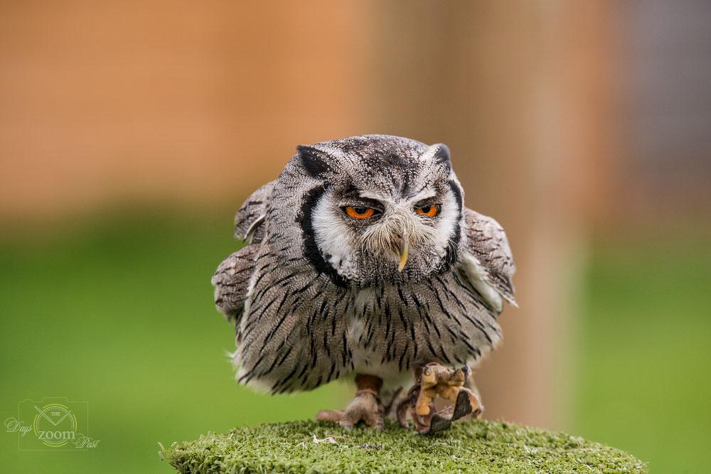 Owl sat
