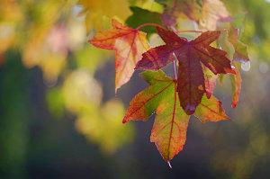 4 Top Arboretum Photography Tips