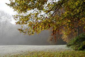 5 Top Autumn Garden Photography Tips & Ideas