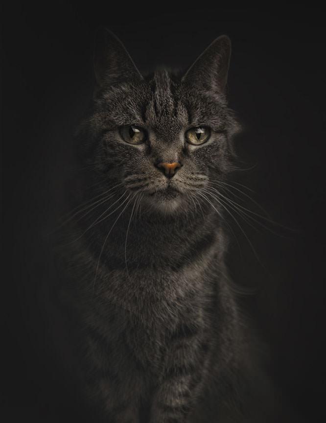 Kat II
