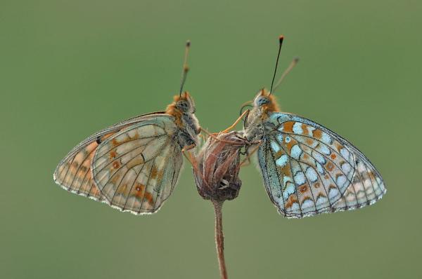 Thumbnail : 5 Top Wildlife Images On Nikon Nation