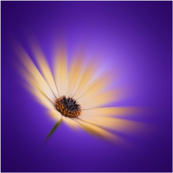 Flower zoom burst