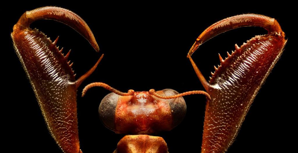 Levon Biss Mantis Fly