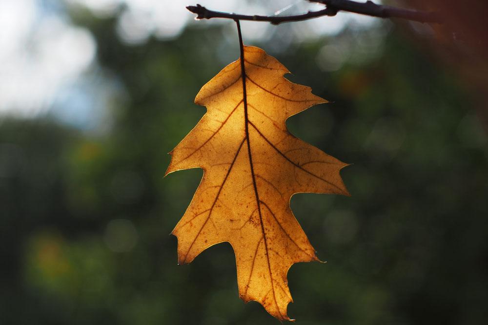 Autumn leaf crop
