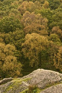Dinas Rock Woods in Wales by Nick Jenkins