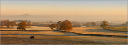 Glastonbury Tor in the mist by Tony Howell