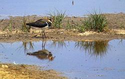 Ian Andrews Backyard Safari Part 3