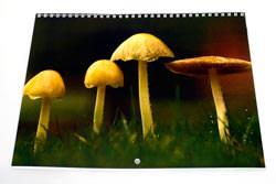 Lulu Calendar cover