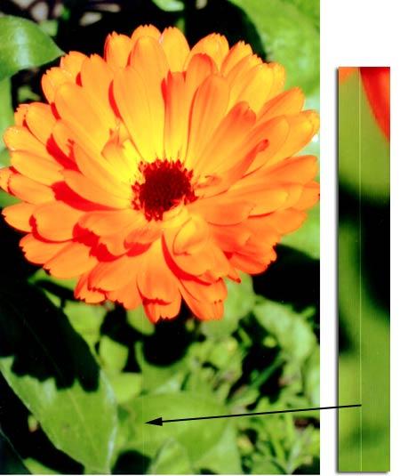 CP100 Flower sample