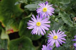 Canon EOS 40D flower