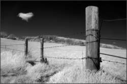 Fence in infrared by John Powell