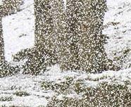 Creating Digital Snow