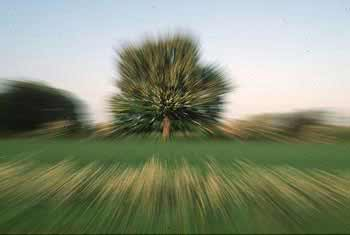 Zoom bursts tree