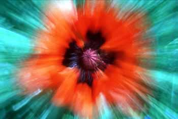 Zoom bursts flower