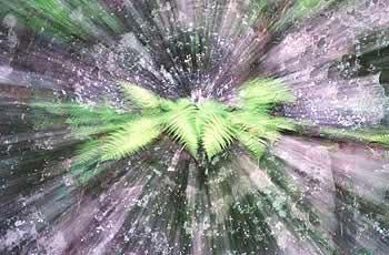 Zoom bursts fern