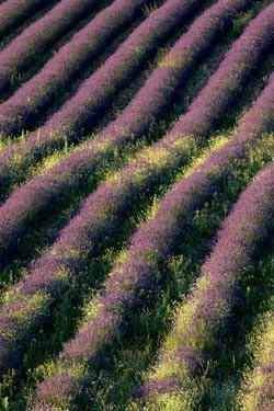 Provence trip by David Noton