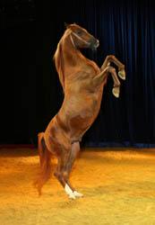spirit of the horse