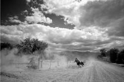 Goucho © Adam Hinton