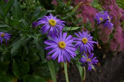 Pentax K100D Super AP flowers