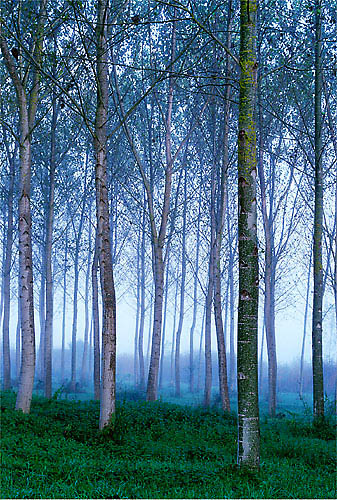 Photographing trees - a how to guide