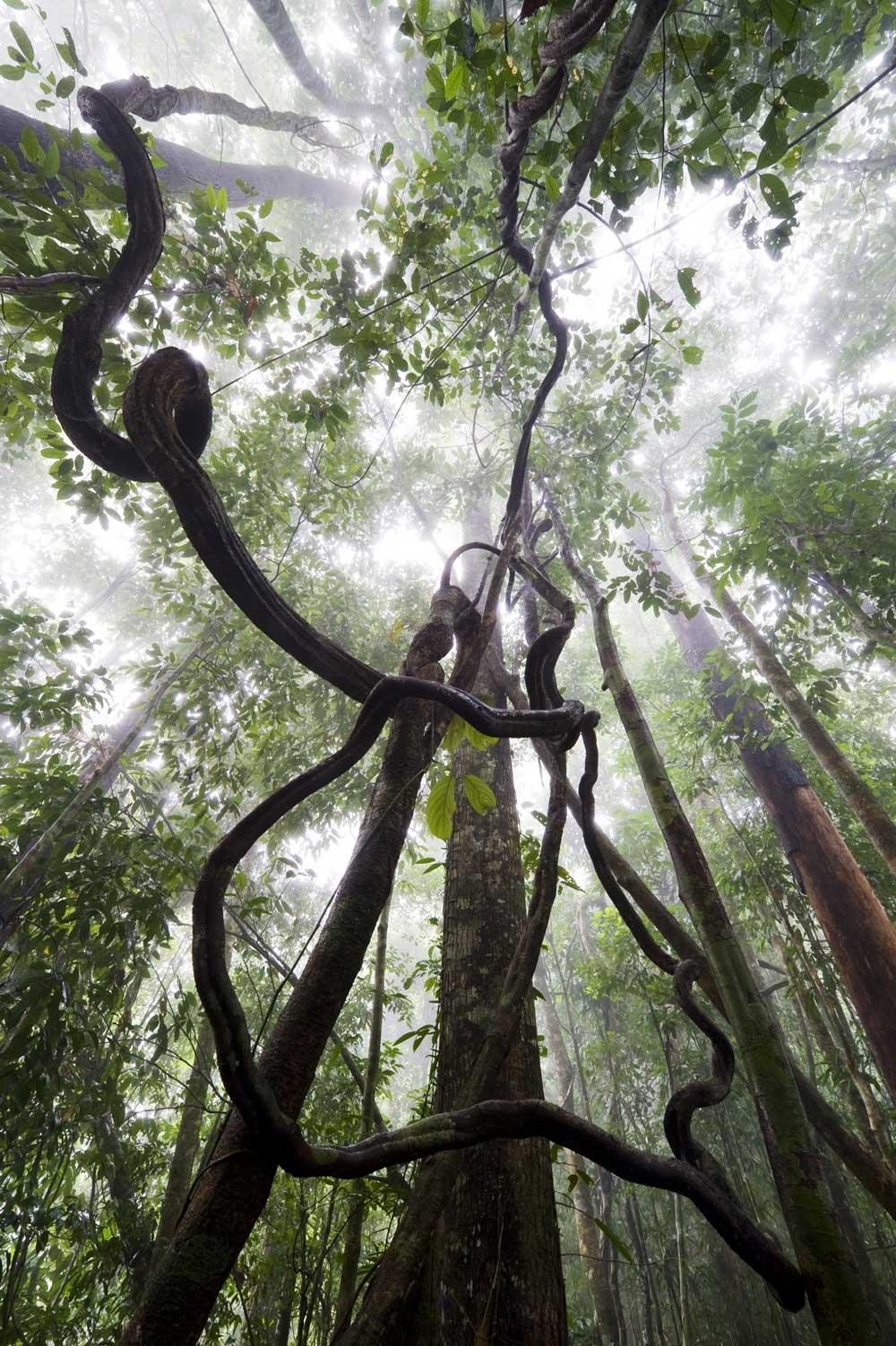 forest_Mattias_Klum.jpg
