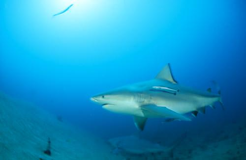Playing with sharks - specialist photography guide
