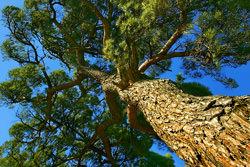 Tree by Patricia Fenn