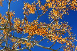 Image of a tree by Patricia Fenn