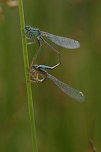 Wildlife nature ephotozine members
