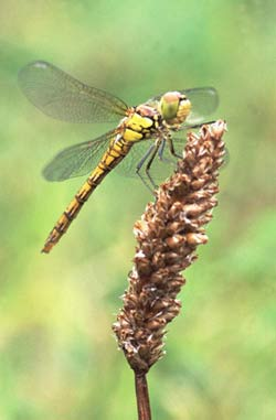 Tips and tricks for insect photography