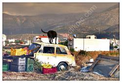 crete, yard, photo