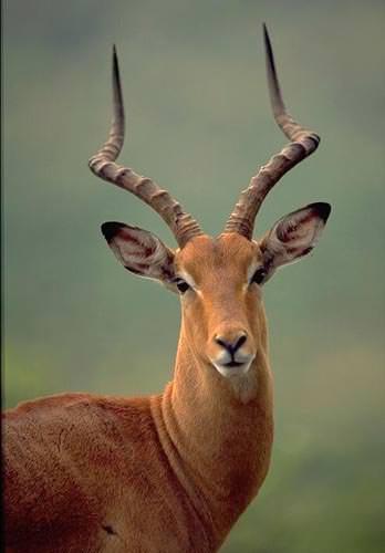 Wildlife photography on safari in Africa