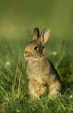 Rabbit by Paul Hobson