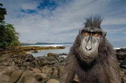 Stefano Unterthiner winner of Animal Portraits, Wildlife Photographer of the Year 2008