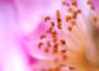 Thumbnail : Abstract Flower Photography Tips