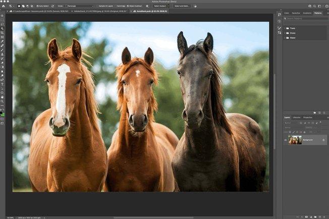 Adobe Photoshop & Lightroom Major Updates