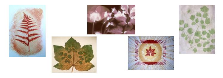 Alternative Photography Summer School - Learn How To Create Lumen Prints & Cyanotypes