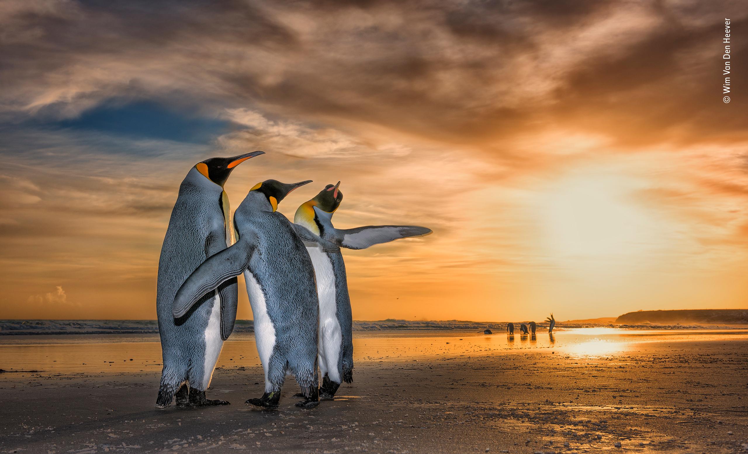 'Three Kings' by Wim Van Den Heever, South Africa